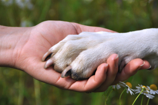 gallery/animal-paw-hand-large
